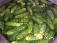 Приготовление огурцов маринованных на зиму: шаг 1