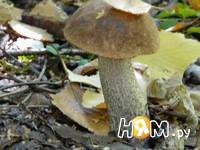 Приготовление маринованных грибов: шаг 1